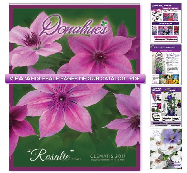 catalog-whole-image