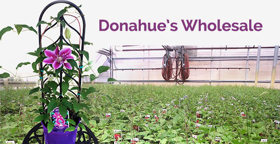 Donahues.wholesale1