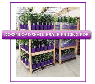wholesale-pricing-download