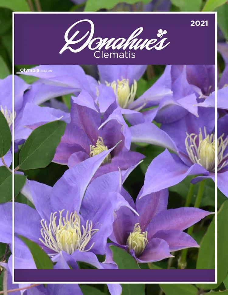 Donahues 2021 catalog